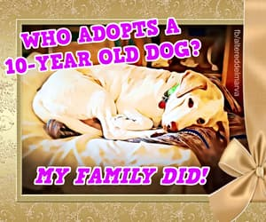 adopted, rescued, and save a life image