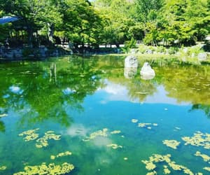 algae, green, and kyoto image