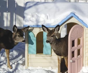 deer, cute, and animals image