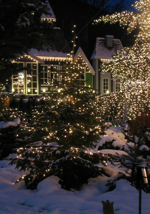 christmas, winter, and lights image