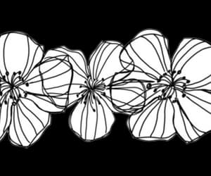 flowers, overlay, and transparent image