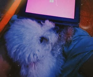 aesthetic, dog, and tumblr image