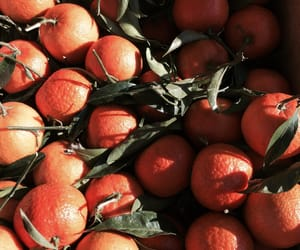 autumn, clementine, and clementines image