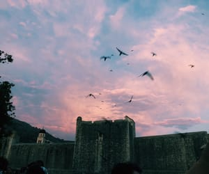 birds, Croatia, and dubrovnik image