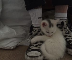 cat, grunge, and converse image