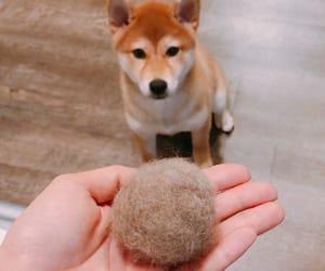 bb, dog, and shiba image