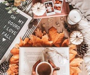 autumn, photo, and pumpkins image