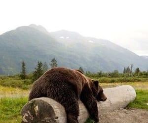 bear, animal, and brown image
