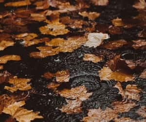 autumn, writers, and vibes image