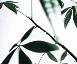 botanic, botanicals, and inspo image