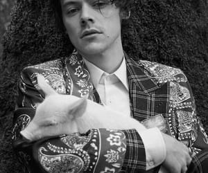 Harry Styles, gucci, and one direction image