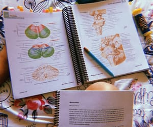 anatomia, chile, and colores image