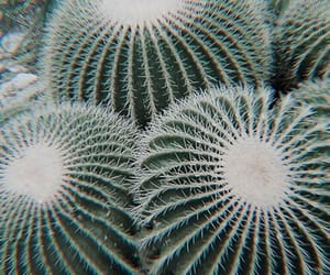 theme, cactus, and rp image
