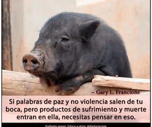 veganismo, go vegan, and especismo image