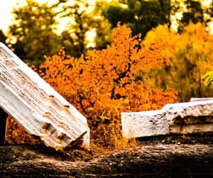 autumn, broken, and nature image
