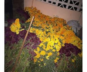 amarillo, DIA, and muertos image