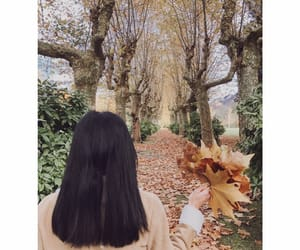 arbre, autumn, and chemin image