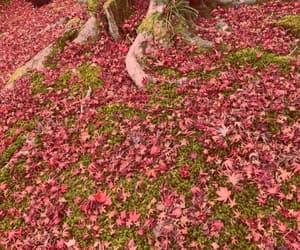 autumn, seasonal, and change image
