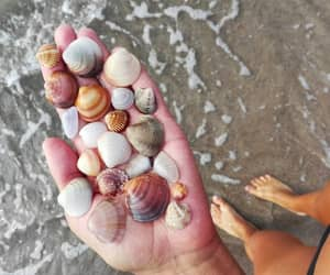beach, legs, and summer image