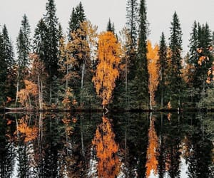 lake, tree, and autumn image