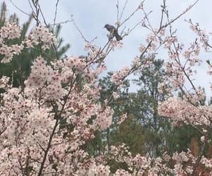bird, cherry blossoms, and pinks image
