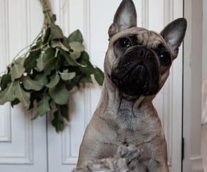 bulldog, herbs, and puppy image