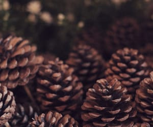 zoella, background, and pine cones image
