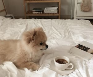 aesthetic, dog, and coffee image