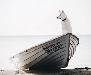 animals, boat, and huskie image