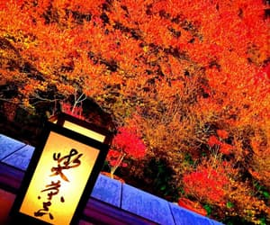 autumn, Temple, and leaves image