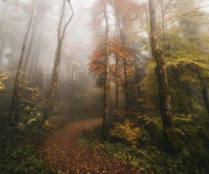 half, nature photography, and switzerland image