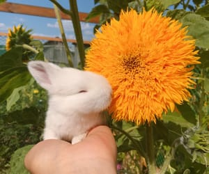 flowers, animal, and bunny image