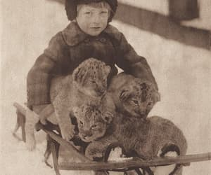 lion cubs, sleigh ride, and central park menagerie image