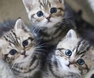 lov cats image