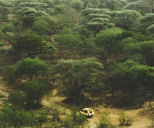 forest, nature, and tanzania image