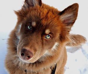 animal, dog, and sweet image
