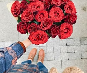 flower, red flowers, and ًورد image