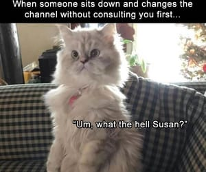 funny cats tv shows image