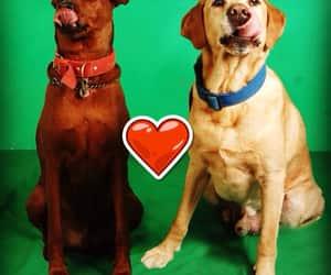 dogs, love, and azul & chokolatte dogs image