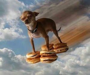 dog, burger, and funny image