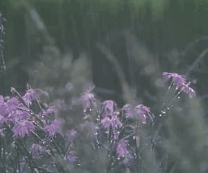 gif, gifs, and flower image