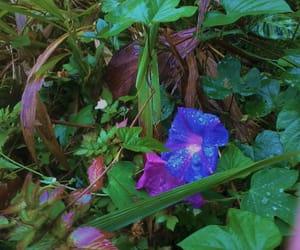 blue, dark, and flower image