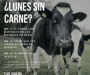 cow, vaca, and veganismo es justicia image