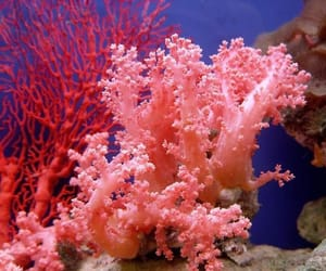 blue, coral, and magenta image