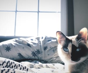 background, blue, and cat image