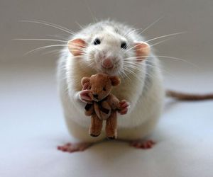 cute, mouse, and rat image