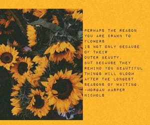 quotes, sunflower, and aesthetic image
