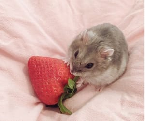 mouse and strawberry image