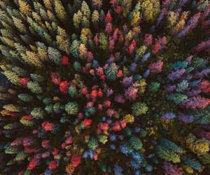 aesthetic, fall, and nature image