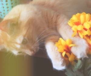 adorable, flowers, and aesthetic image
